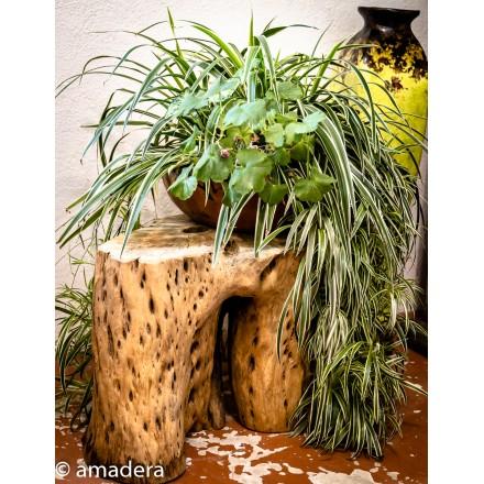 Bois flotté tronc de cactus