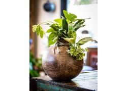 Home décoration végétale