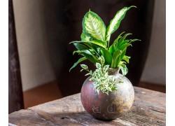 Déco végétale pour la maison