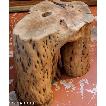 Bois de cactus flotté tronc deco